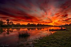 The Burnt Orange Sunrise (acipinarli) Tags: fisher light boat fog orange reflection misty trees sunrise morning lake cock grass sky