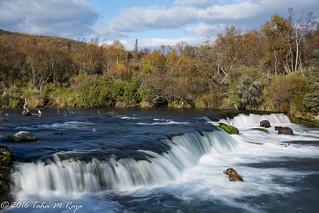 Three Bears at Brooks Falls II