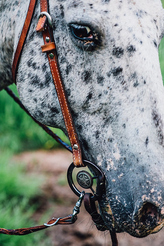 Tonto the appaloosa