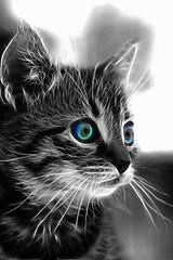 Fractal cat 3 (Szpisjk Attila (Cintu)) Tags: cat fractal