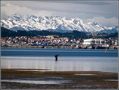El mariscador- (RosanaCalvo) Tags: españa sol mar agua europa nieve cantabria montañas picosdeeuropa pedreña mariscadores rememberthatmomentlevel1 rememberthatmomentlevel2