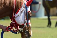 20130405-_DSC3848 (Fomal Haut) Tags: horse japan nikon nagoya 80400mm d4   14teleconverter  d800e