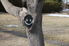 Happy tree (smileyLife) Tags: white black tree face yard canon lens eos rebel paint zoom cut front spray smiley stump t3 75300 ultrasonic