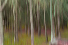 The Enchanted Forest where your soul can run free......... (loobyloo55) Tags: wood pink trees brown abstract green nature grass forest grey bush australia