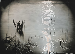 (mikelanst) Tags: lake water tintype ambrotype 13x18 wetplatecollodion col·lodióhumit