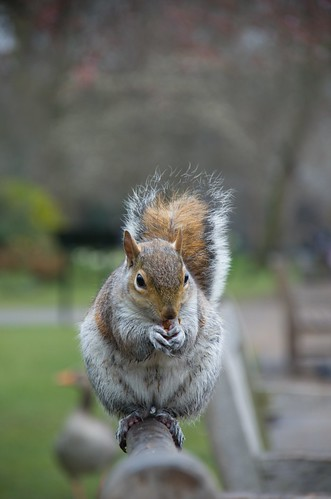 St. James Park resident ©  Still ePsiLoN
