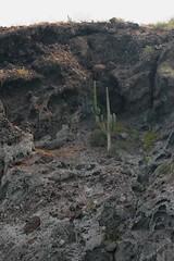 Isla Espiritu Santo, B.C.S. (Pablo Leautaud.) Tags: mexico bajacaliforniasur isla lapaz bcs espiritusanto pleautaud