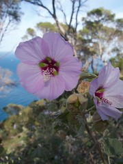 Flower (Jonathan Rowland) Tags: flower spain penyaldifach