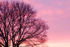 Throwback Thursday | [003] **Explored** (flashfix) Tags: pink sunset sky canada tree nature silhouette skyline clouds nikon purple branches pinksky mothernature pinkclouds 2010 purpleclouds ottawaontario d80 nikond80 throwbackthursday rockcliffeottawa april252011