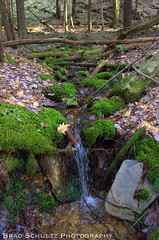 Moss Waterway (B.G.Schultz-Photography) Tags: nikon cookforeststatepark d7000
