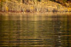 Wood Lake Reflections 3 (LongInt57) Tags: trees brown canada green nature water yellow reflections landscape reflecting golden bc okanagan shoreline lakes