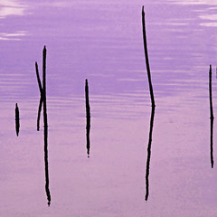 lake-reed-abstract (al-ien) Tags: abstract pond arty abstractreality