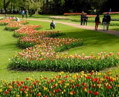 Groot Bijgaarden (~~Nelly~~) Tags: spring belgium belgique belgi lente printemps tulipe tulp grootbijgaarden