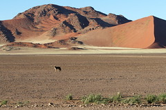 Picasa Land37 (Roberto_ Leoni) Tags: africa trip travel panorama white mountain lake colour landscape lago sand jackal view desert dunes dune adventure clay cielo views vista thorn sesriem namibia colori kalahari viaggio crociera park nama solitaire deserto monti windhoek sabbia sossusvlei namib bushmen herero deadvlei vlei selfdrive  tree naukluft valley river trees big dead lago ovambo pan hiddenvlei sciacallo camel namib mafwe dune54 duna54 tsauchab