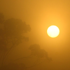 A foggy start (phunnyfotos) Tags: morning sun tree weather fog sunrise canon dawn haze foggy australia victoria eucalypt vic eucalyptus hazy gumtree canonpowershots2is canonpowershot gippsland warragul phunnyfotos