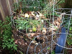 compost (Just Back) Tags: rot sc nature rotting avocado may southcarolina fungi dirt fungus carolina carbohydrates breakdown scraps refuse decomposition recycling biology bacteria slop germs peels decomposing proteins fingi