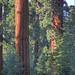 Case+Mountain+Area+of+Critical+Environmental+Concern%2C+California