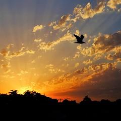 Sunset at the city (fpaulo2k1) Tags: avian beatuty bird cloud cloudporn flying dramaticsky idylic majestic nature nopeople orange outdoors scenics sky sun sunset tranquyility nofilter
