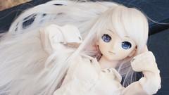 white angel /  (merry-chan) Tags: pandora hatsune miku dollfie dream volks 13 super corsica corse white dolly story eyes custom