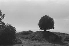 suomenlinna (Ilona Fogelson) Tags: canonrebel2000 agfaapx400 photo film finland suomi suomenlinna nature analog analogphotography summer canon canonef24105 canon24105 canoneos300 negative helsinki sea agfa tree bw blackandwhite
