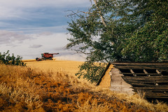 Season After Season (Pedalhead'71) Tags: whitmancounty washington palouse whet harvest farm tractor combine landscape rural garfield unitedstates us