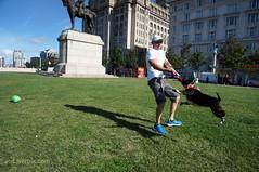 DSC06202 (liverpix) Tags: cleo dog performing anthonywalsh photowalk 500px liverpool pierhead liverbuilding ballerina ballet