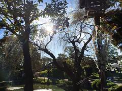 Sunny day @ Jardin Japones (MarusLopez #) Tags: buenosaires palermo arbol rayosdesol sun