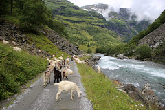 The Flam Valley near Kardal (JonCombe) Tags: flam norway