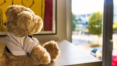 Bear's Life (Antoinehias) Tags: dream prison libert liberty inaccessible impossible sadness sad bear ted teddy futur canon 1200d light window toy peluche