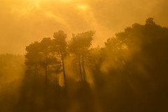 The Golden Forest (billpeppasphotography) Tags: godrays god rays sun sunset sunrays forest gold golden yellow cloud clouds sky orange tree trees woods