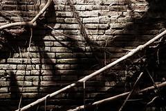 Living wall (Peter J Brent) Tags: tainan taiwan anpingoldtaitandco treehouse banyantree