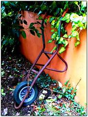 Rusted (McArdle's5) Tags: light garden londonderry northernireland wheelbarrow derry
