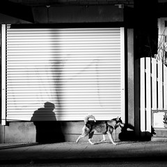 The Wild Ones (petertandlund) Tags: street city shadow urban blackandwhite bw dog blancoynegro monochrome square graffiti shadows sweden stockholm streetphotography documentary streetscene sthlm djur xe1 fujix fotosondag fs130414