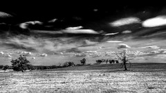 Black & white (Indigo Skies Photography) Tags: camera trees sky blackandwhite bw grass clouds digital rural lens photo aperture exposure flickr farm australia victoria iso photograph heathcote paddock leefilters northernhighway tokina1116mmf28 leefoundationkit lee09ndgradsoft nikond7000 raychristy 09graduatedneutraldensity
