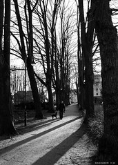 light − shadow − dog walk (KLAVIeNERI) Tags: light shadow bw photographer streetshots dusseldorf bilk bwconverted mingthein leicaforum thorstenovergaard stevehuff leicax1 leicaimages lightroom4 ilovemyleica photographersontumblr