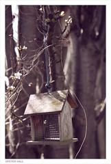 Des Res (peterphotographic) Tags: uk england london nikon britain birdhouse e17 allotment walthamstow eastlondon d300s camerabag2 dsc6617cb2peachedwm
