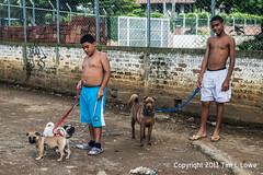 Boys With Dogs (Tim L Lowe) Tags: street dogs boys nikon colombia nios perros d800 jamund