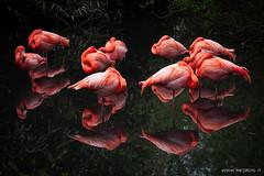 Sssst..... (mrcphoto.it) Tags: italy parco green nature fauna canon flora eco pavia fenicotterorosa naturalistico oasidisantalessio 5dmarkii wwwmrcphotoit