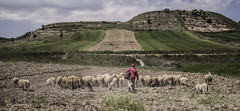 Shepherd (Gianmarco Lorusso) Tags: sky italy nature work landscape photo sheep natural shepherd hill vogue job apulia