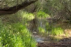"Primavera en el bosque de los Tarayes • <a style=""font-size:0.8em;"" href=""http://www.flickr.com/photos/15452905@N02/8705617966/"" target=""_blank"">View on Flickr</a>"