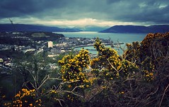 124/365 gorse above gourock (werewegian) Tags: french clyde hill free basin viewpoint gourock day124 lyle werewegian day124365 3652013 365the2013edition 04may13