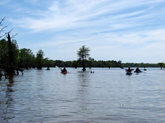 Lowcountry Unfiltered - Lake Marion Ghost Town Paddle - April 2013 (269) (greenkayak73) Tags: friends beagle nature america fun lucy southcarolina adventure kayaking ghosttown mrrussell riverdog lakemarion greenkayak73 randomconnections photopaddling lowcountryunfiltered nitrorev johnatgcc rockscemetery