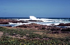Anna Bay - NSW Australia (jcqsmer) Tags: flowers sea birds rocks waves blinkagain me2youphotographylevel1
