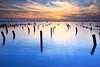 oyster field (Thunderbolt_TW) Tags: sunset sea sky sun reflection water windmill canon landscape taiwan 夕陽 getty 台灣 日落 風景 hy windturbine gettyimages bai 彰化 changhua 風車 彰濱 西濱 肉粽角 彰濱工業區 風景攝影 hsienhsi 線西 fave50 5d2 changpingindustryarea hybai