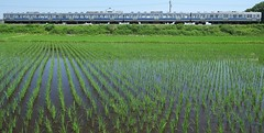 on one sunny day in the rainy season. (photoholic image) Tags: rural train scenery railway ricefield localtrain paddyfield