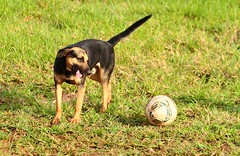 IMG_92825 (Max Hendel) Tags: dog canine cachorro canino dogslife canoneosdigital vidadeco vidadecachorro photobymaxhendel bymaxhendel fotografadopormaxhendel maxhendel photographedbymaxhendel pormaxhendel canoneosphoto photographermaxhendel maxhendelphotography