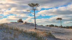 Dunas en invierno (GaboUruguay) Tags: winter sky cloud naturaleza cold tree beach nature canon arbol uruguay coast sand day natural dune arena cielo invierno duna nube canelones elpinar gabouruguay gabrielpaladino