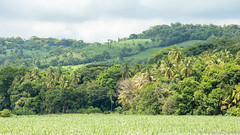 11. On the road to Nica-6.jpg (gaillard.galopere) Tags: 2016 cultur guatemala green trees