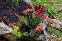 Princeville_Botanical_Gardens-8 (Chuck 55) Tags: princeville botanical gardens kauaihawaii kauai