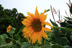 IMG_0445 (nelson_tamayo59) Tags: anaga rural tenerife flora flor